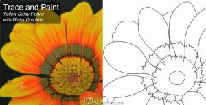 Traceable and Reference Photos of Yellow Daisy Flower with Water Droplets