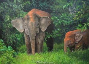 Mother And Baby Pygmy Elephant