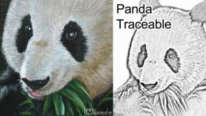 Reference Photos And Traceable For Panda Bear